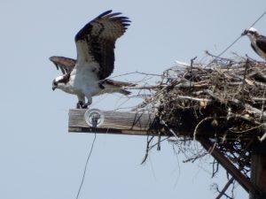 new-nest-2-050516-g-mowat-resized