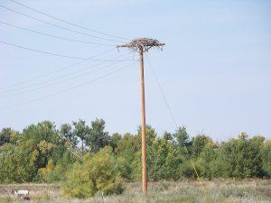 cottonwood-ranch-power-pole-nest-1-d-regele
