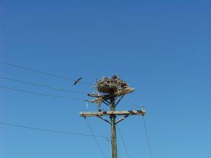 swinging-bridge-with-nestlings-s-regele